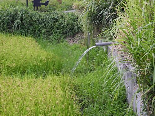 行政院針對高鐵沿線地層下陷區以8年33億農業黃金廊道之名,發展節水農業。
