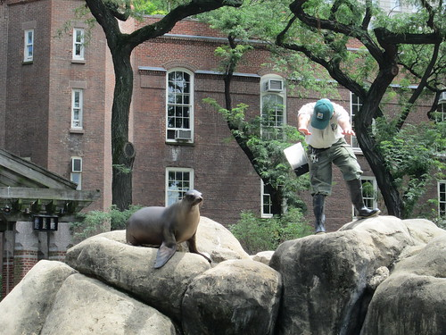 Central Park Zoo, NYC. Nueva York