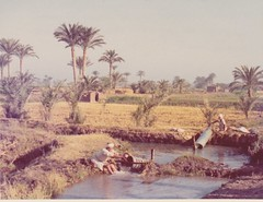 Archimedes Screw in Egypt