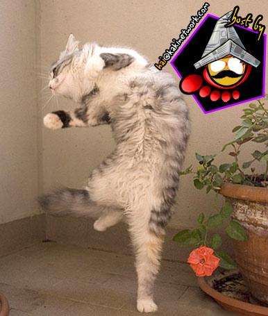 gambar kucing 11