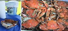 seafood boil(0.0), lobster(0.0), fish(0.0), american lobster(0.0), crab(1.0), animal(1.0), shellfish(1.0), crustacean(1.0), seafood(1.0), invertebrate(1.0), dungeness crab(1.0), king crab(1.0), food(1.0),