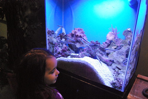 JA - slimy fish