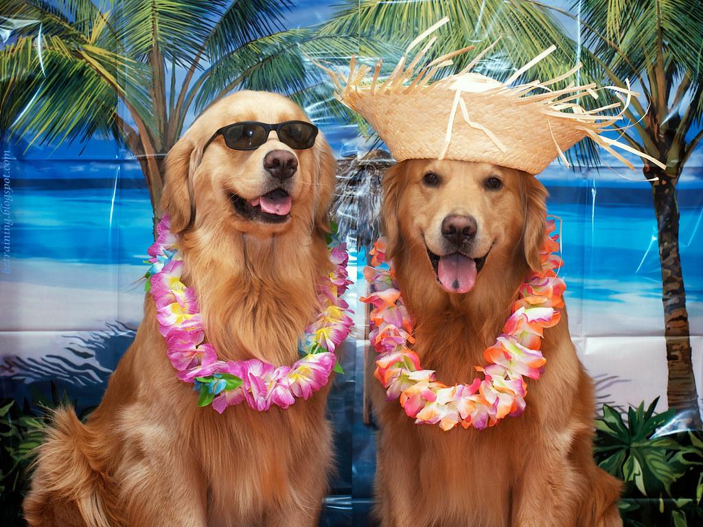 Σκύλος διακοπές