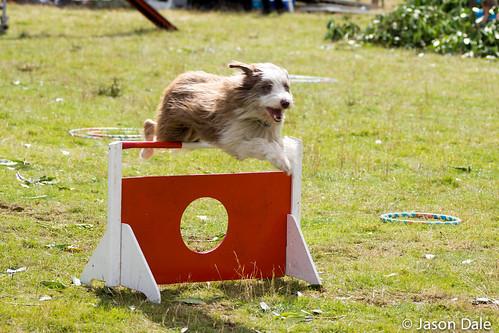 Rockwood Dog Training