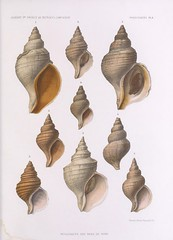 wood(0.0), invertebrate(0.0), conch(1.0), seashell(1.0), conch(1.0),