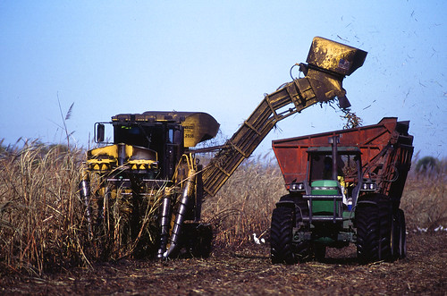 Harvesting sugarcane in south Florida, ARS scientists at the Sugarcane Production Research Unit are identifying research to help sustain both agriculture and natural Everglades ecosystems.