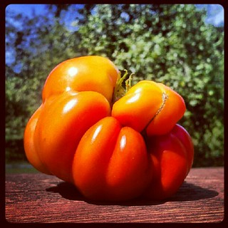 Funky #tomato looks pretty #cool #igrewit #containergarden #deck #summer #salad #food #photooftheday