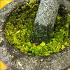 learning to make green curry paste