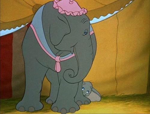 Dumbo peek-a-boo