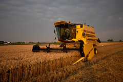 agriculture, field, wheat, vehicle, harvest, crop, rural area, harvester,