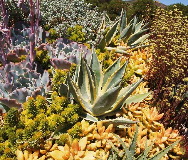 Succulent rooftop