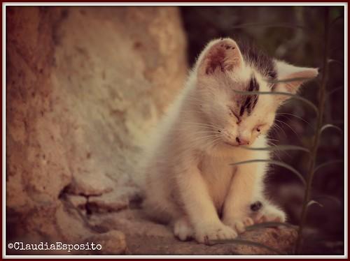 Che sonno! by *Claudi*