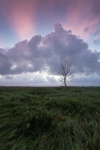 morning blue trees light sky plants cloud sun tree green nature colors field grass vertical clouds sunrise landscape outdoors photography early colorful europe estonia view outdoor nopeople baltic land nordic rise andrei reinol andreireinol