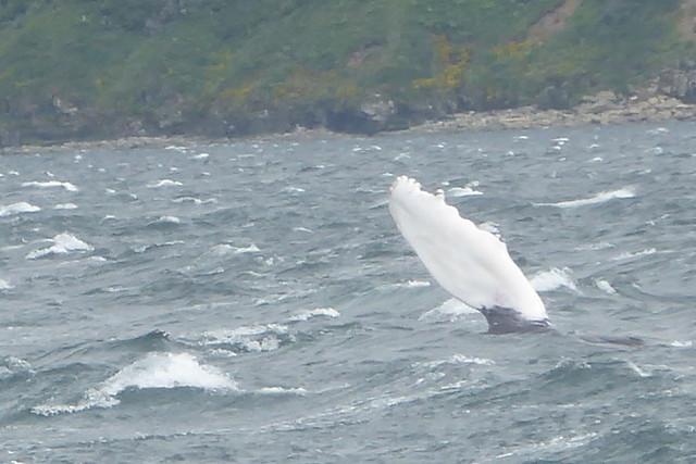 whale visit Big Alinchak