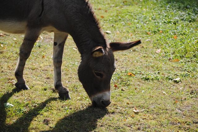 Tierpark Herford