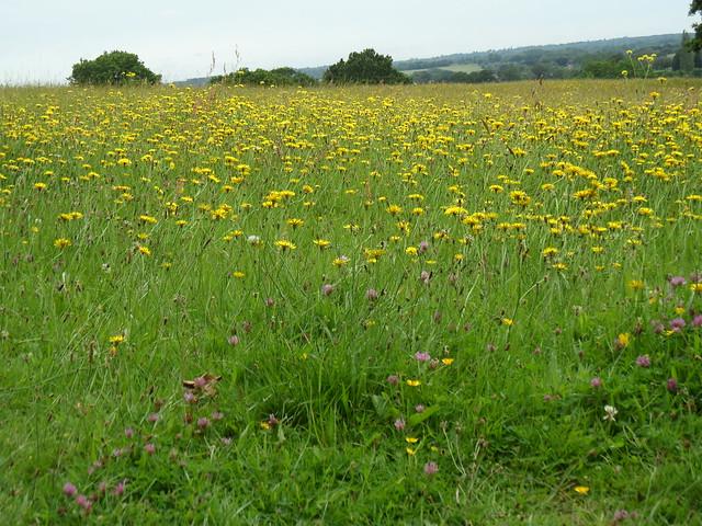 Meadow Stock