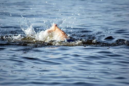 nick swimming
