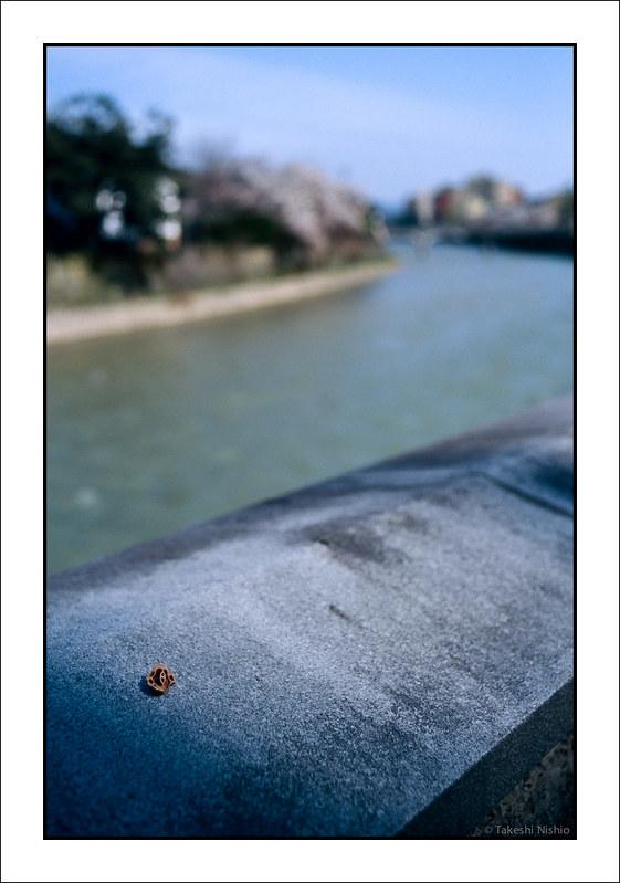 クルミの殻 / Walnut Shell