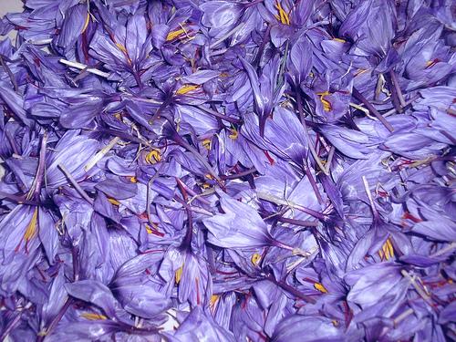 saffron-flower-9