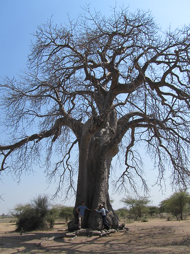 Chris and Mike fulfilling their wish to hug a baobab tree