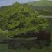 El árbol casa by alexbcastano