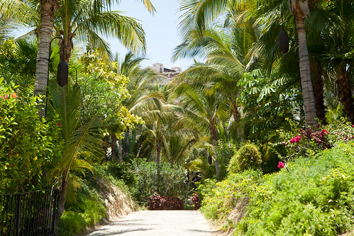 Beautiful tropical plants along the paths