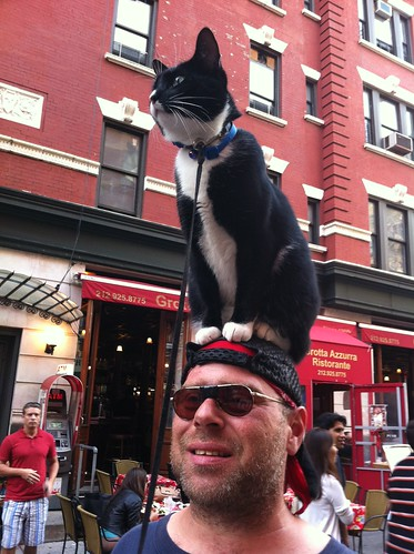 "Famous ""cat on head"" guy"