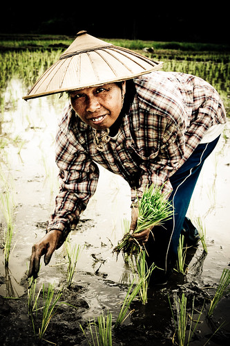 Rice Paddy Portrait Posing-8004
