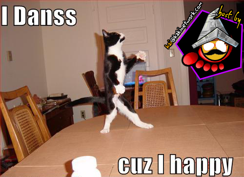gambar kucing 17
