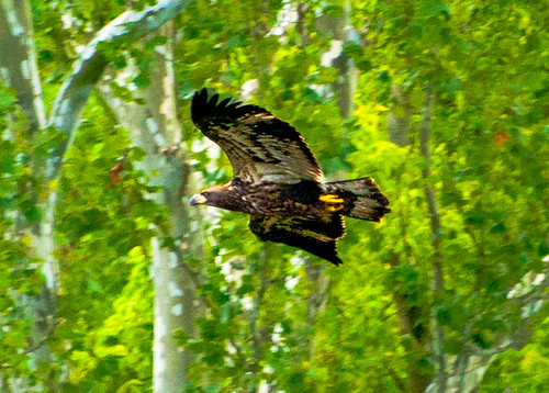 b_youngEagles120801_12974-Edit