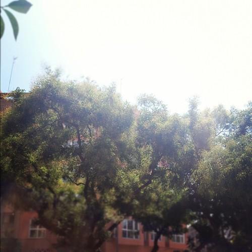Árboles bajo el cielo... by rutroncal