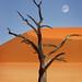 Namibia, Sossusvlei, Deadvlei by Dietmar Temps