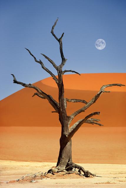 Namibia, Sossusvlei, Deadvlei