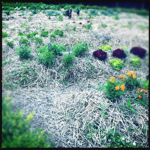 De tuinen van Annevoie