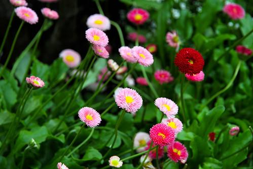 Ketchikan - Flowers