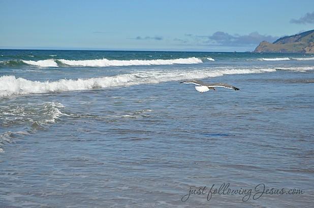 beach 8212f.jpg