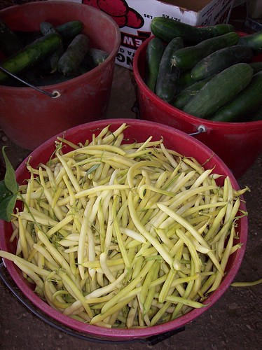 the yellow beans we picked