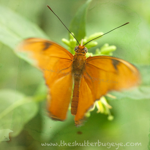 Butterfly 8 by The Shutterbug Eye™