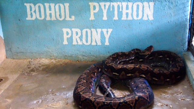 prony, a very big snake