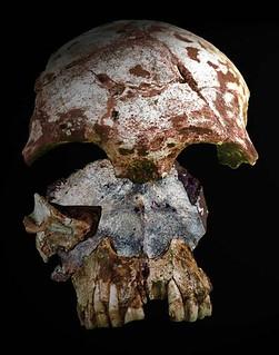 oldest human skull SE Asia