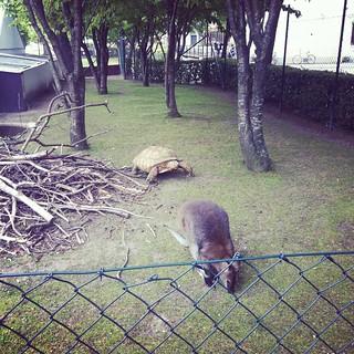 folkets park (instagram)