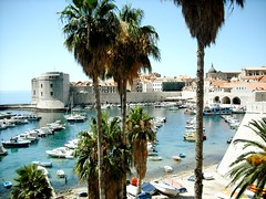 Palm trees in Dubrovnik