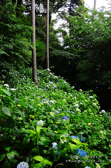 2016松尾大社 (9).JPG