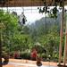 Nilgiri balcony early morning