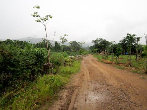 Rainy walk-3