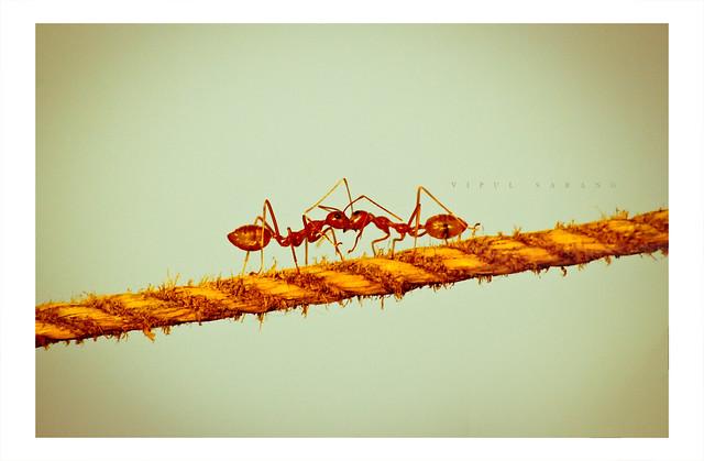 ♥ Ant ♥