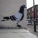 Pigeon, Stewy stencils, The Ambrette, Margate