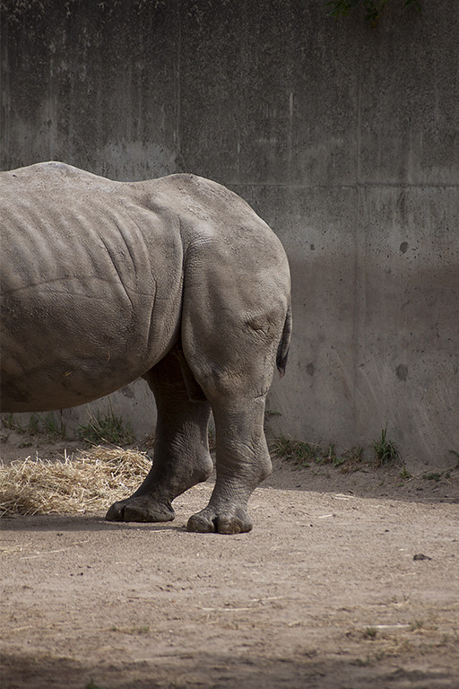 rhino butt