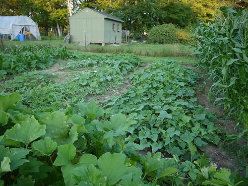 Late July garden