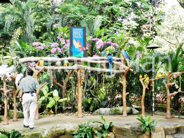 Jurong Bird Park 01